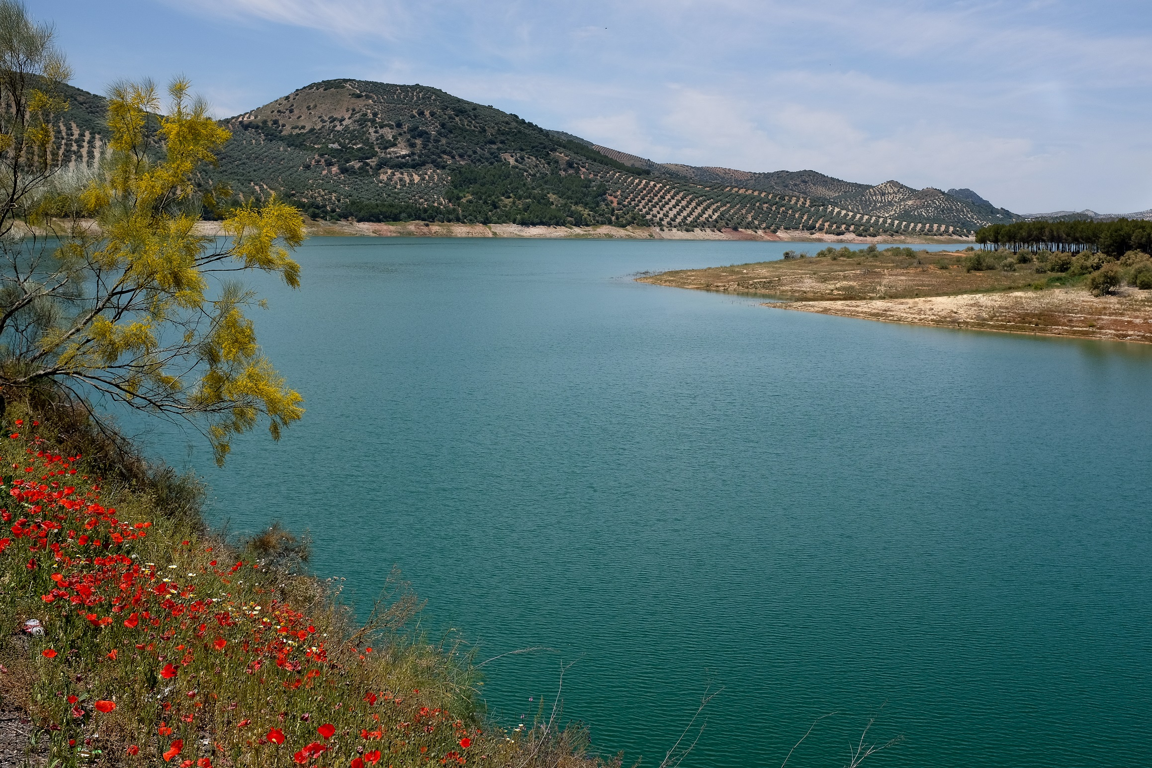 Lake of Iznajar in spring