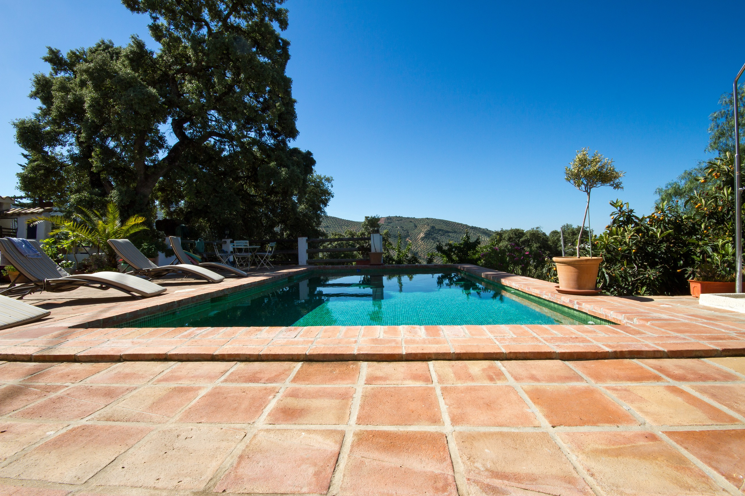 A pool with a view of the ancient olive grove of rural andalucia